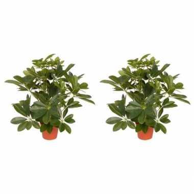 2x groene schefflera/baby struik kunstplanten 55 cm voor binnen