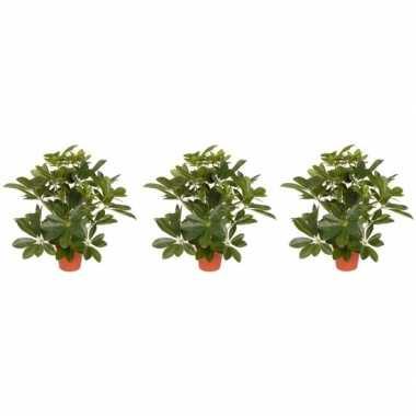 3x groene schefflera/baby struik kunstplanten 55 cm voor binnen